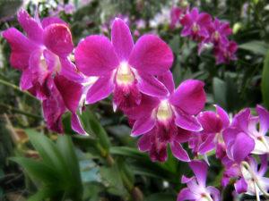 Орхидеи для милых дам