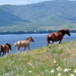 Лошади на озере Банном